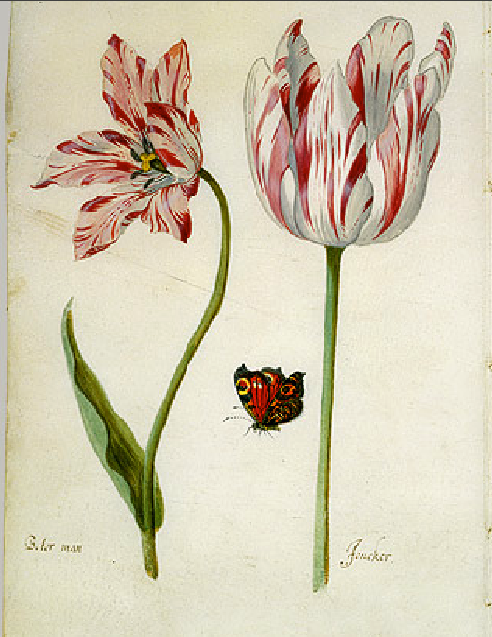 two-tulips
